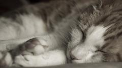 Sleeping Cat Close Up Wallpaper 40327