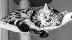 Sleeping Cat Wallpaper 40323