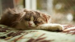 Sleeping Cat Wallpapers 40324