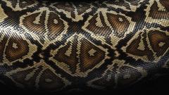 Snake Skin Wallpaper 29850