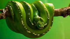 Snake Wallpaper 29848