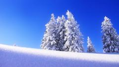 Snow Wallpaper 41949