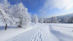 Snow Wallpaper 41950