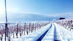 Snow Wallpaper 41951