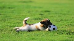 Cute Soccer Wallpaper 5659