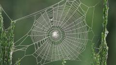 Spider Web 41571
