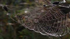 Spider Web HD 41577