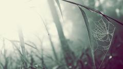 Spider Web Wallpaper 41574