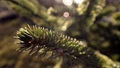 Spruce Wallpapers 39081