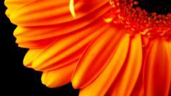 Stunning Flower Petals 25878