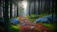 Stunning Forest Path 32580