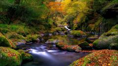 Stunning Forest Stream 34447