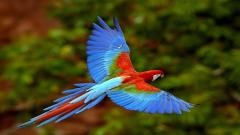 Stunning Parrot Wallpaper 19879