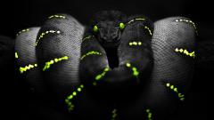 Stunning Snake Wallpaper 29849