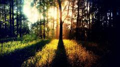 Sunbeam Background 31313