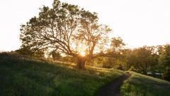 Sunbeam HD 31331