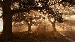 Sunbeam Pictures 31314