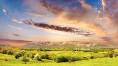 Sunny Meadow 29593