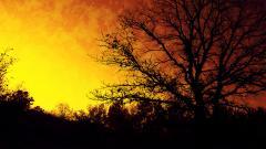Tree Silhouette 34128