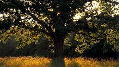 Tree Silhouette 34131