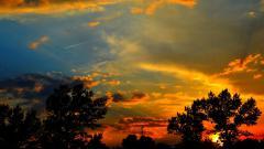 Tree Silhouette Wallpaper HD 34124