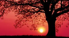 Tree Silhouette Wallpapers 34127