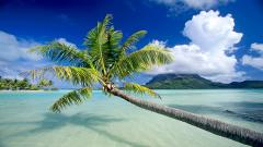 Tropical Beach Background 17584