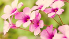 Tropical Flowers 21680
