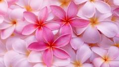 Tropical Flowers Background 21677