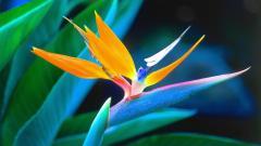 Tropical Flowers Wallpaper 21668
