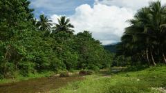 Vegetation 32425