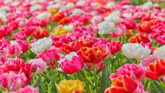 Vivid Flowers 34856