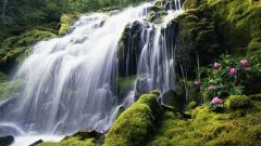 Waterfall Wallpaper 19626