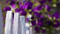Wood Fence 31765