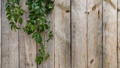 Wood Fence Background 31769