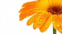 Yellow Flowers 14144