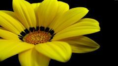 Yellow Flowers 14146