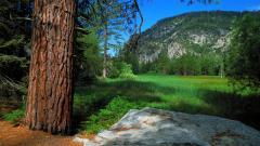 Yosemite Pictures 31477