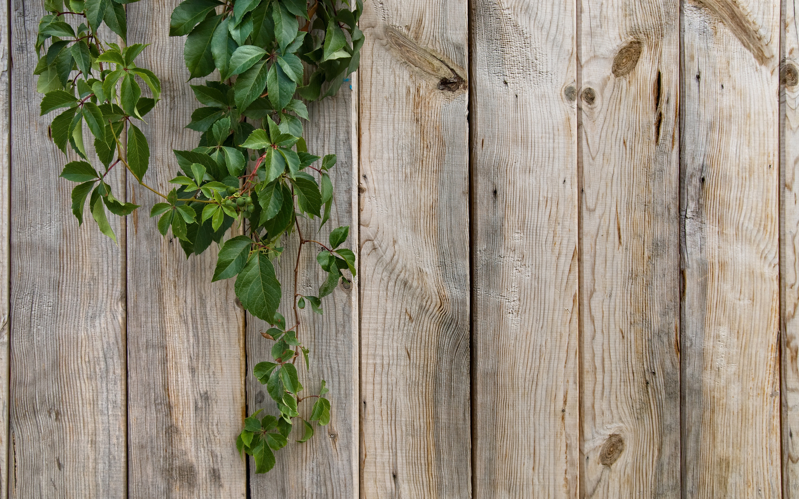 Wood fence background px hdwallsource