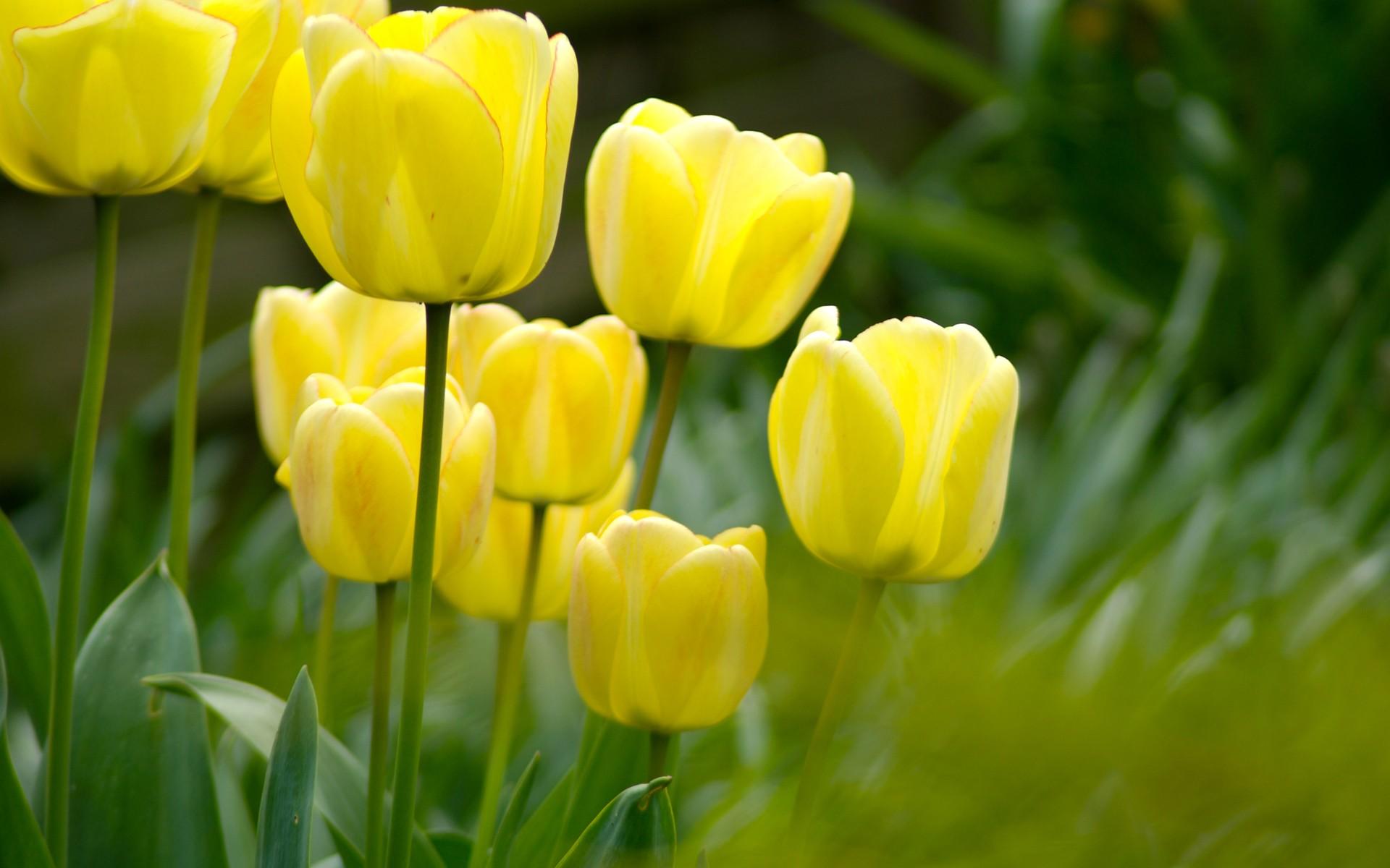 Yellow flowers 14141 1920x1200px yellow flowers 14141 mightylinksfo
