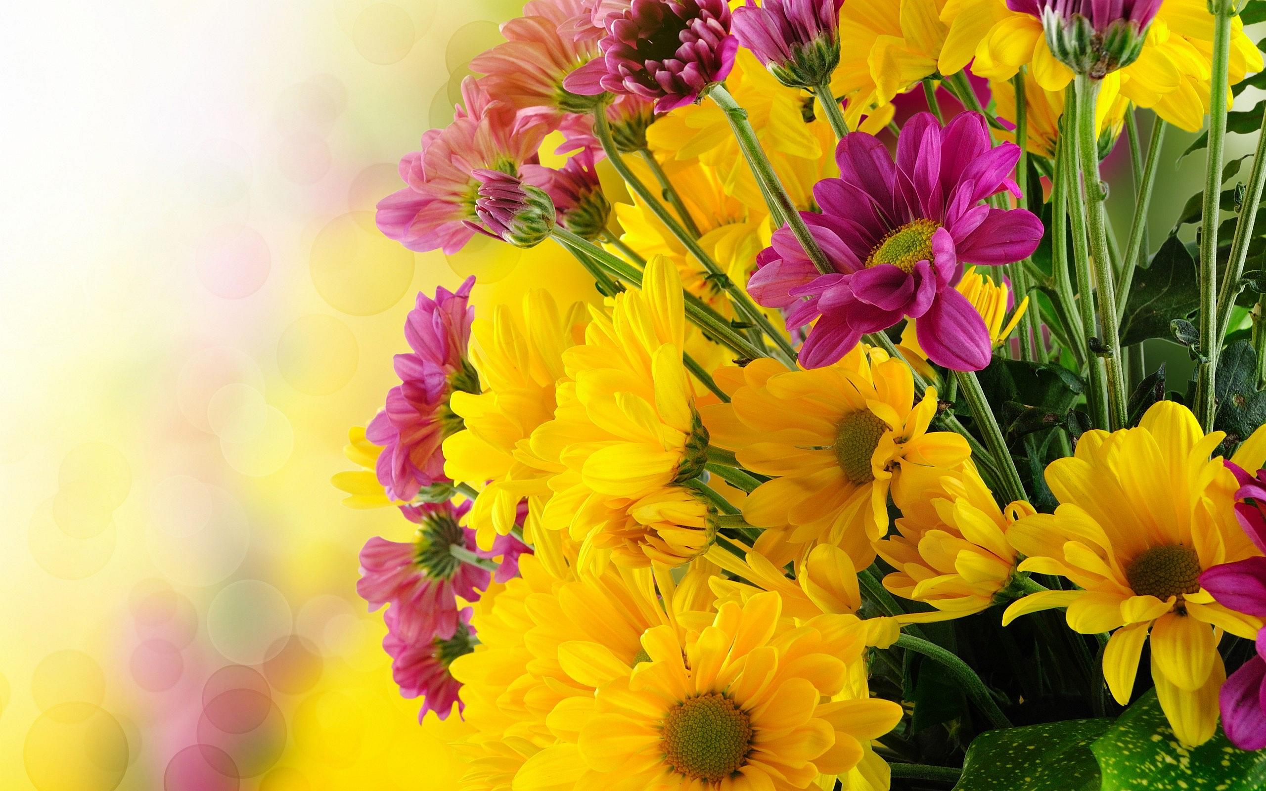 Yellow flowers 14143 2560x1600 px hdwallsource yellow flowers 14143 mightylinksfo Choice Image