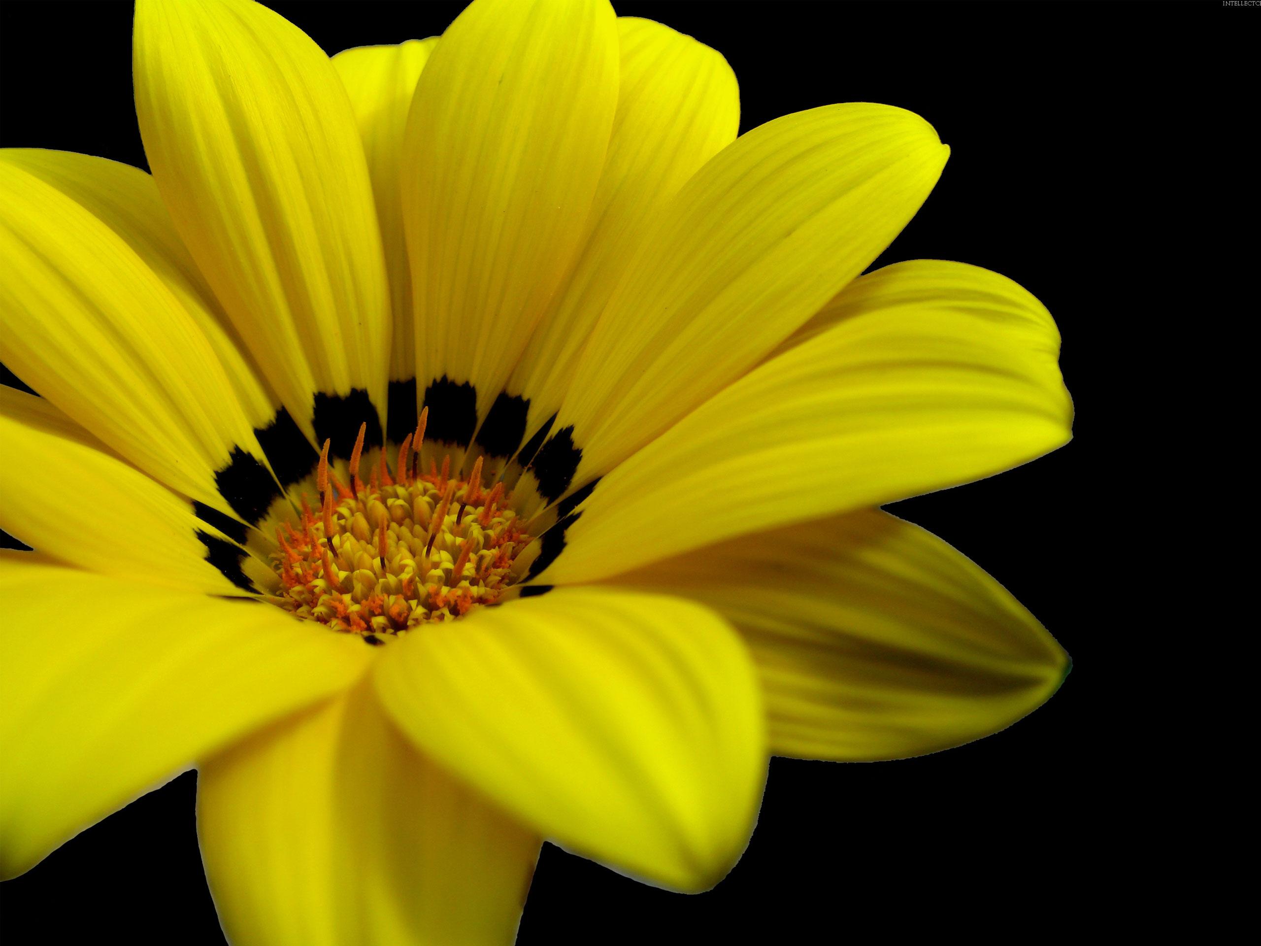 Yellow flowers 14146 2560x1920 px hdwallsource yellow flowers 14146 mightylinksfo Choice Image