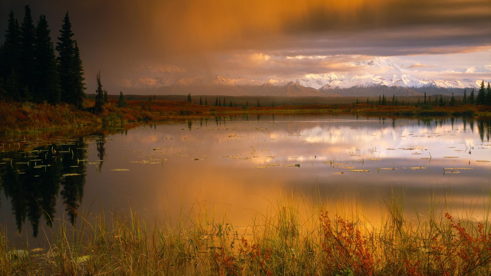 amazing denali national park wallpaper 31546