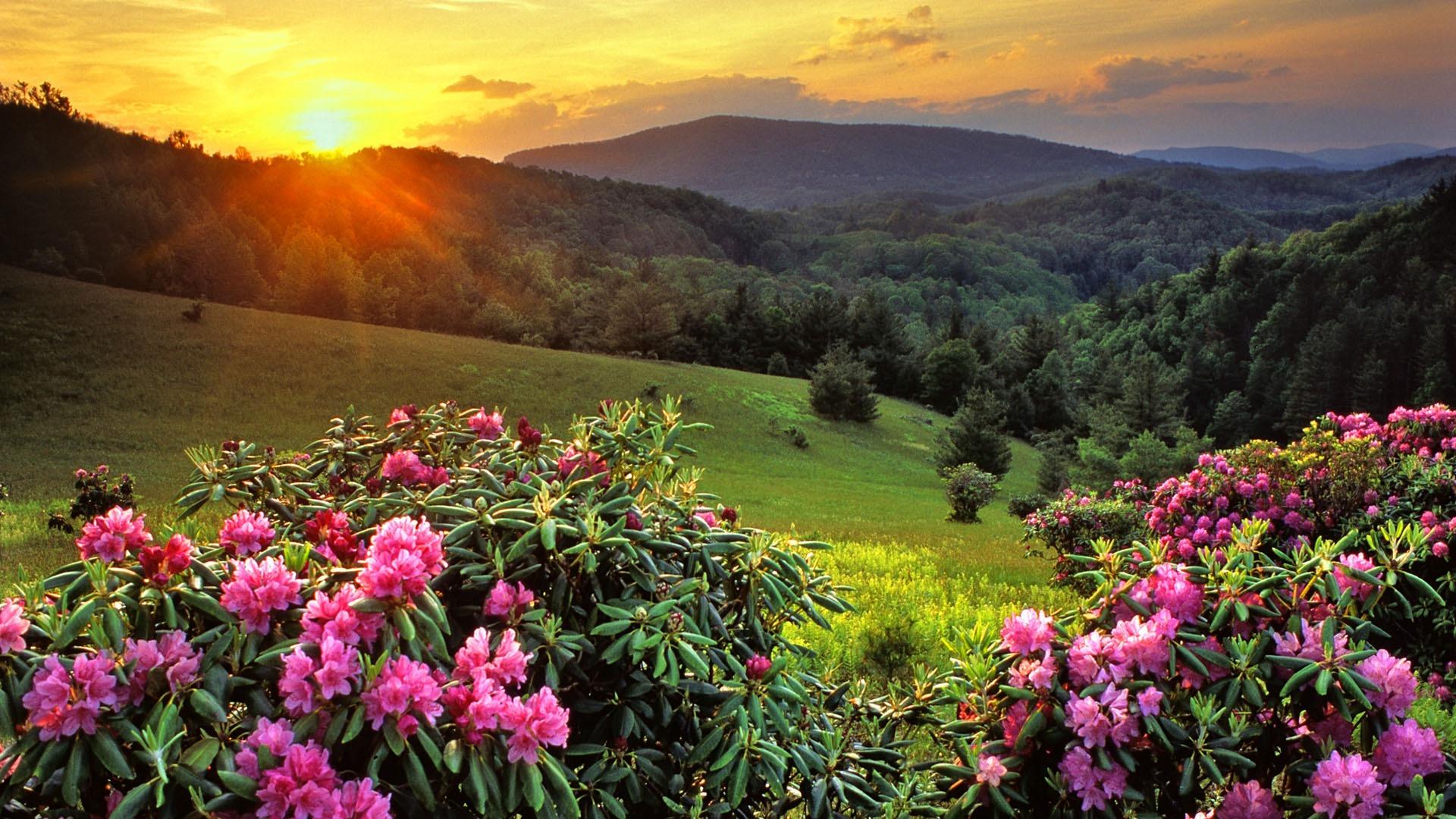 amazing scenery pictures 18779