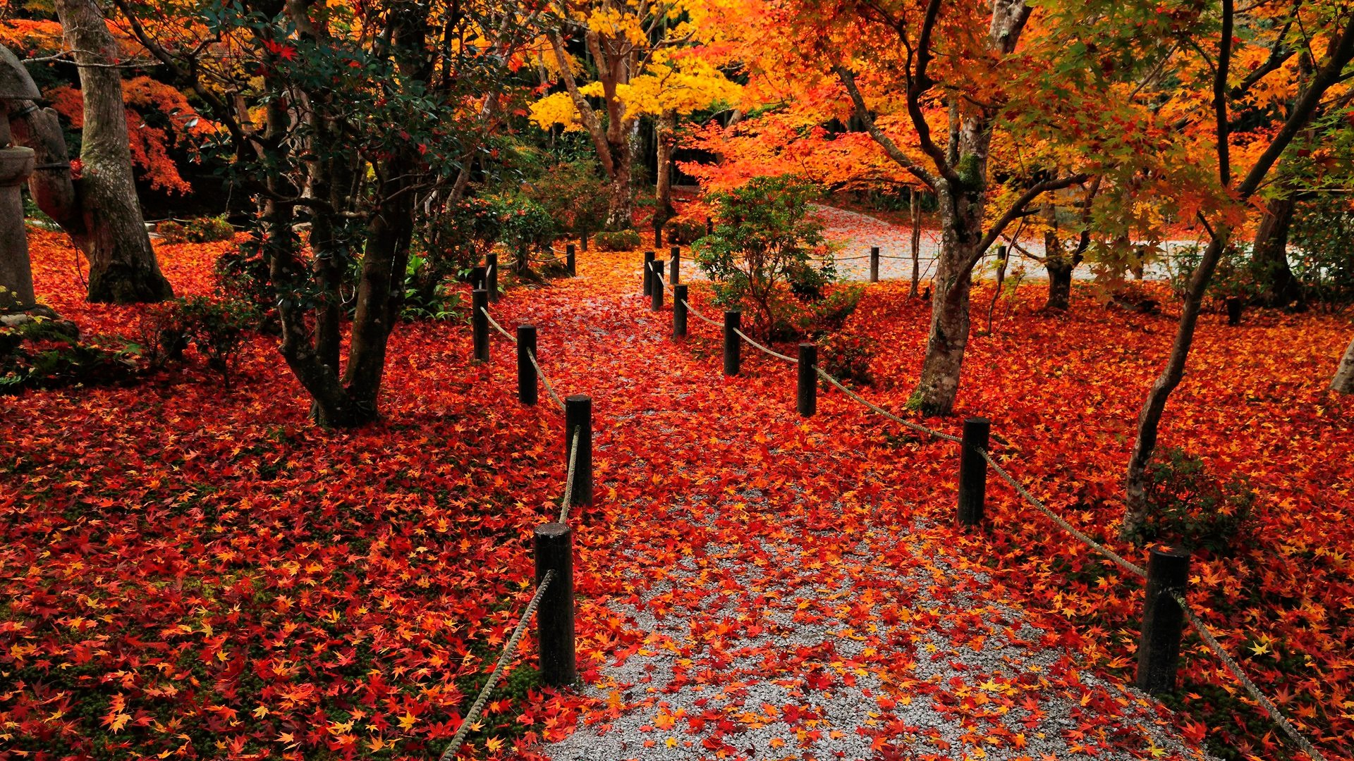 autumn wallpaper free download