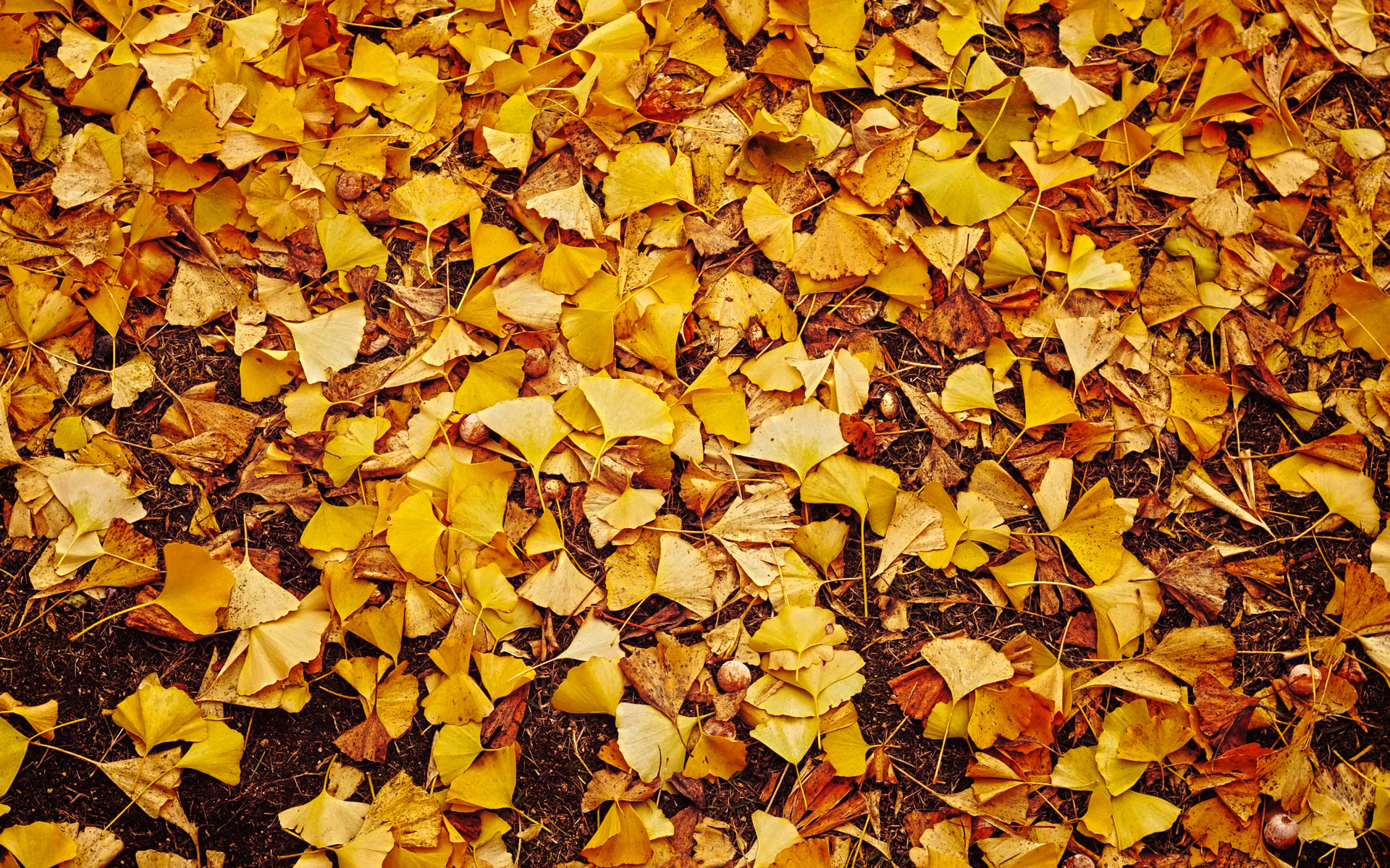 Фото кучи из осенних листьев