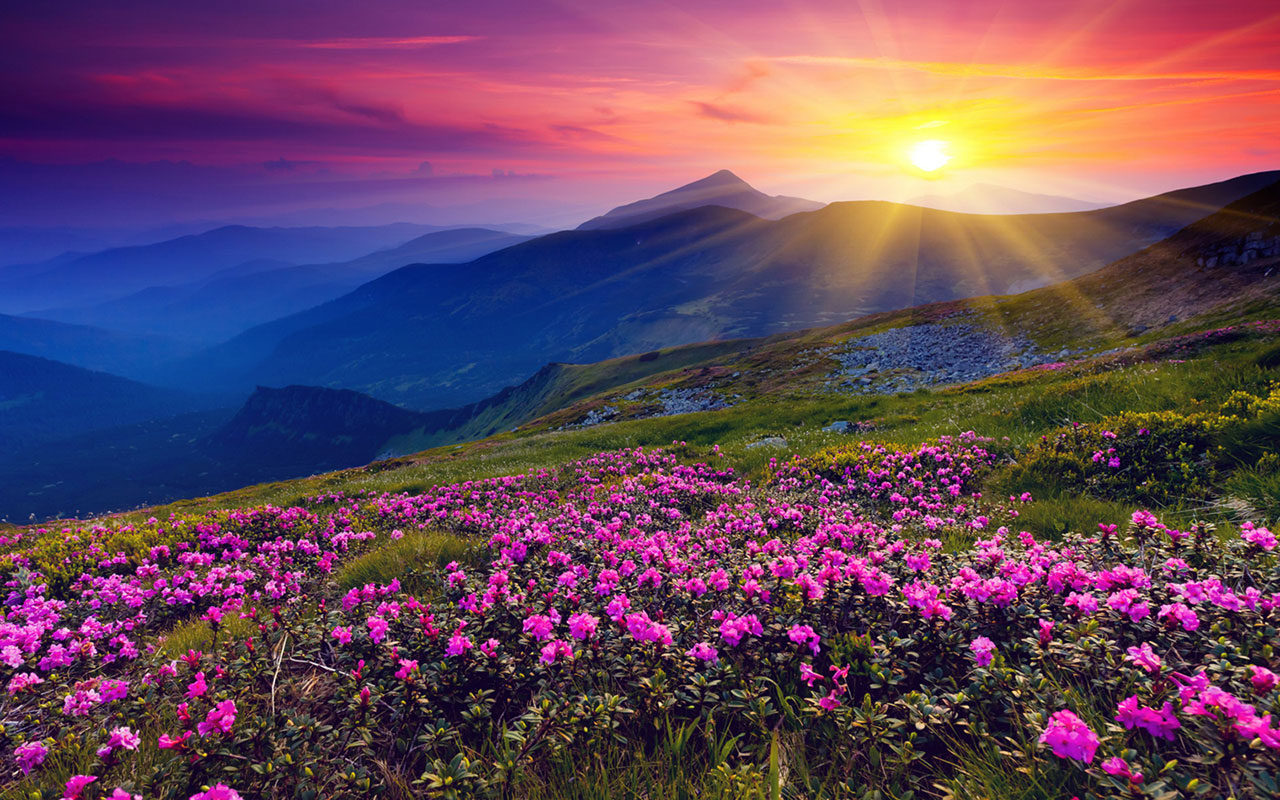 Beautiful flower landscape 29011 1280x800 px for Beautiful flower landscapes