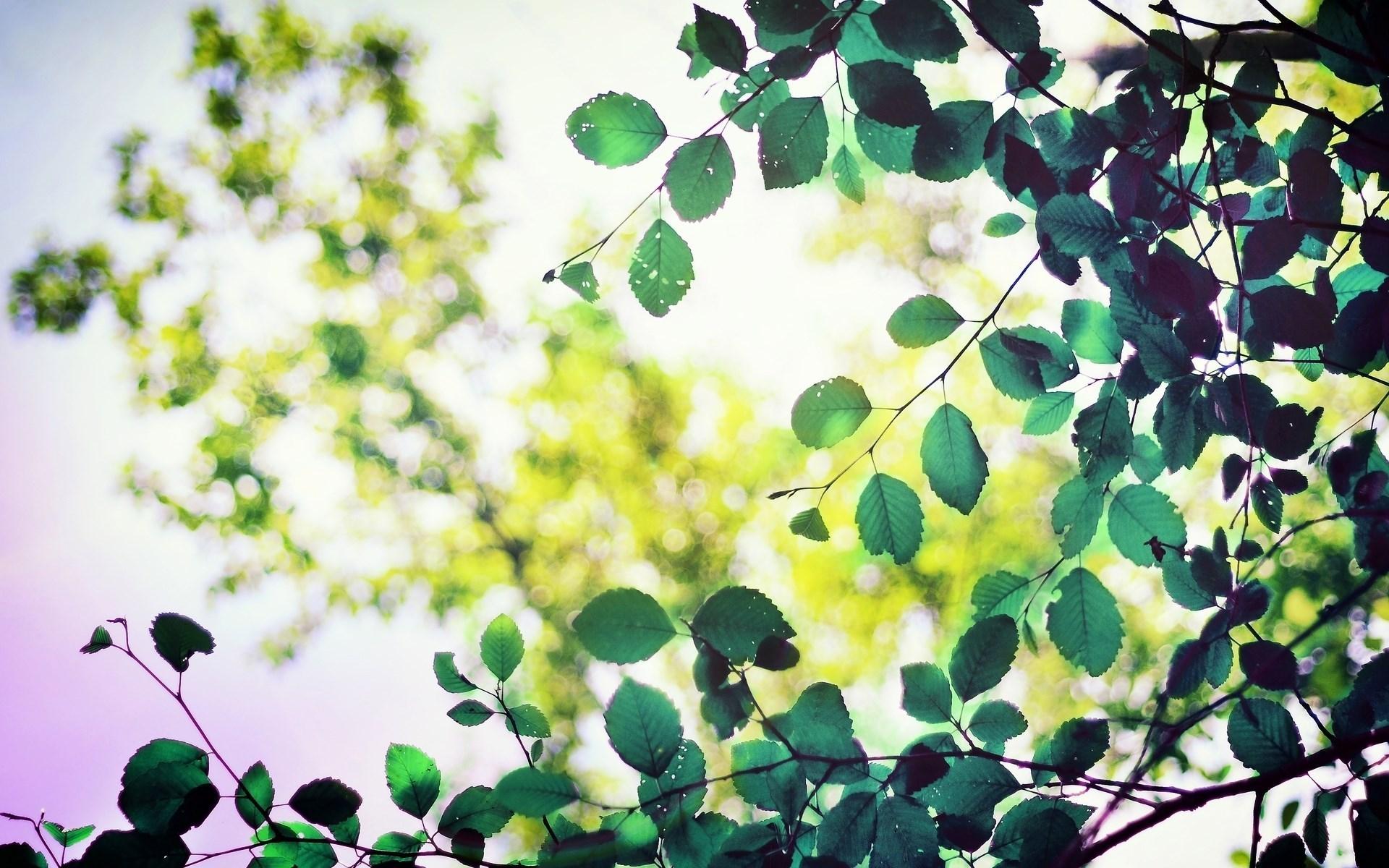 beautiful leaves macro wallpaper 39020