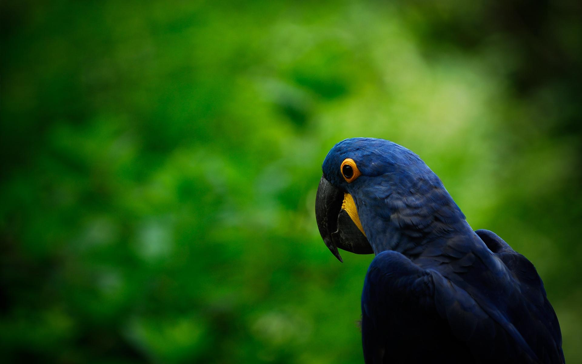 beautiful macaw wallpaper 35858