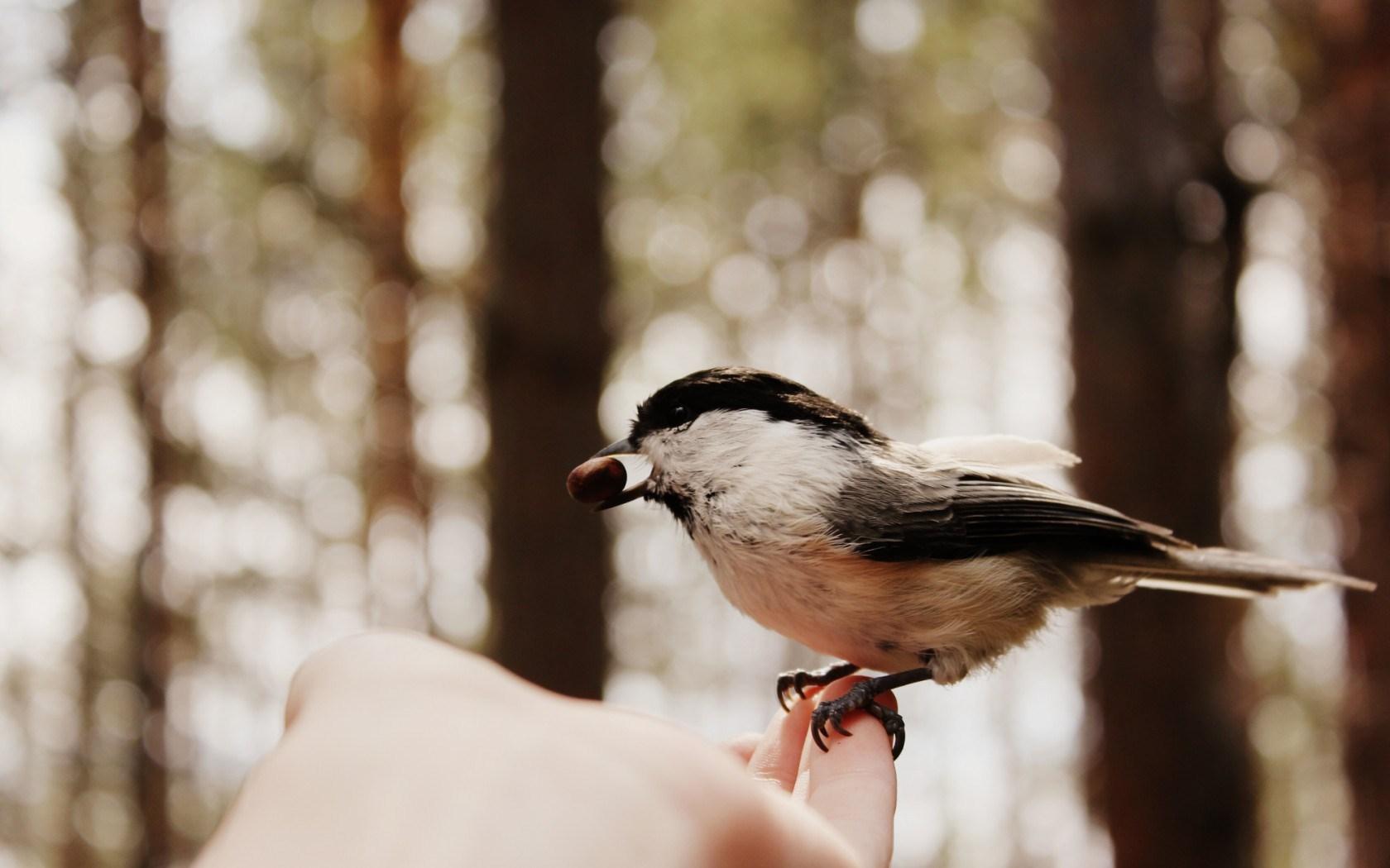 bird in hand 39528